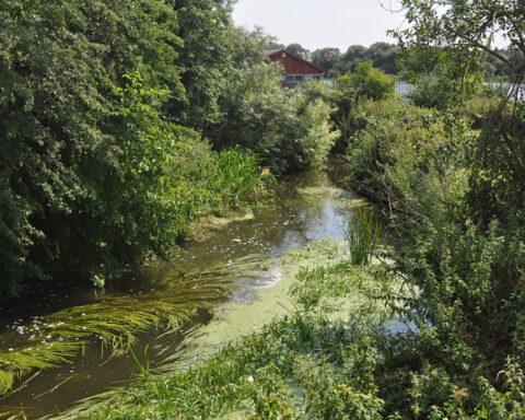 River Colne – Troy